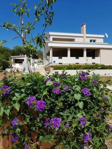 Holiday rentals Brgulje, Island of Molat VILLA KALIOPE